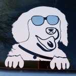 Window Decal - Golden Sun Glasses